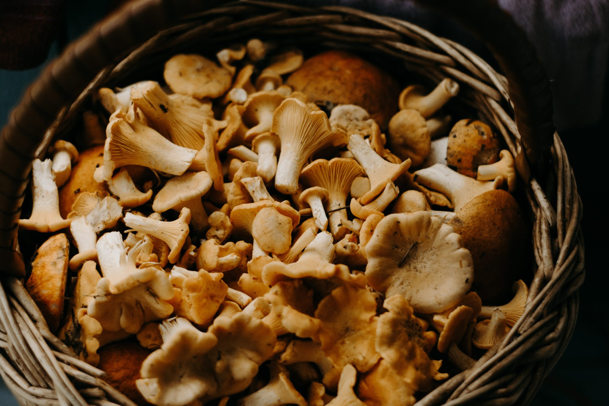 You'll die if you touch those mushrooms. Basket full of chanterelles. Enable images to view.