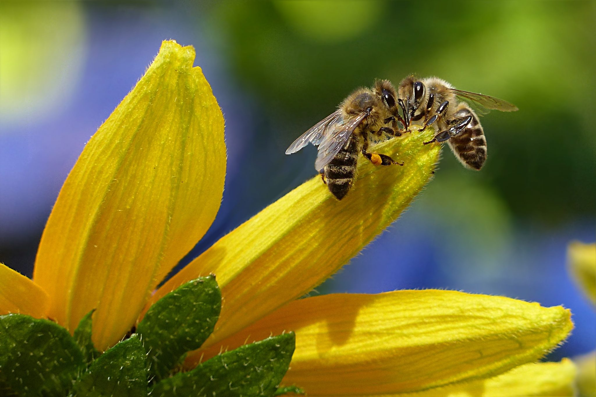 mushrooms help bees. enable images to view