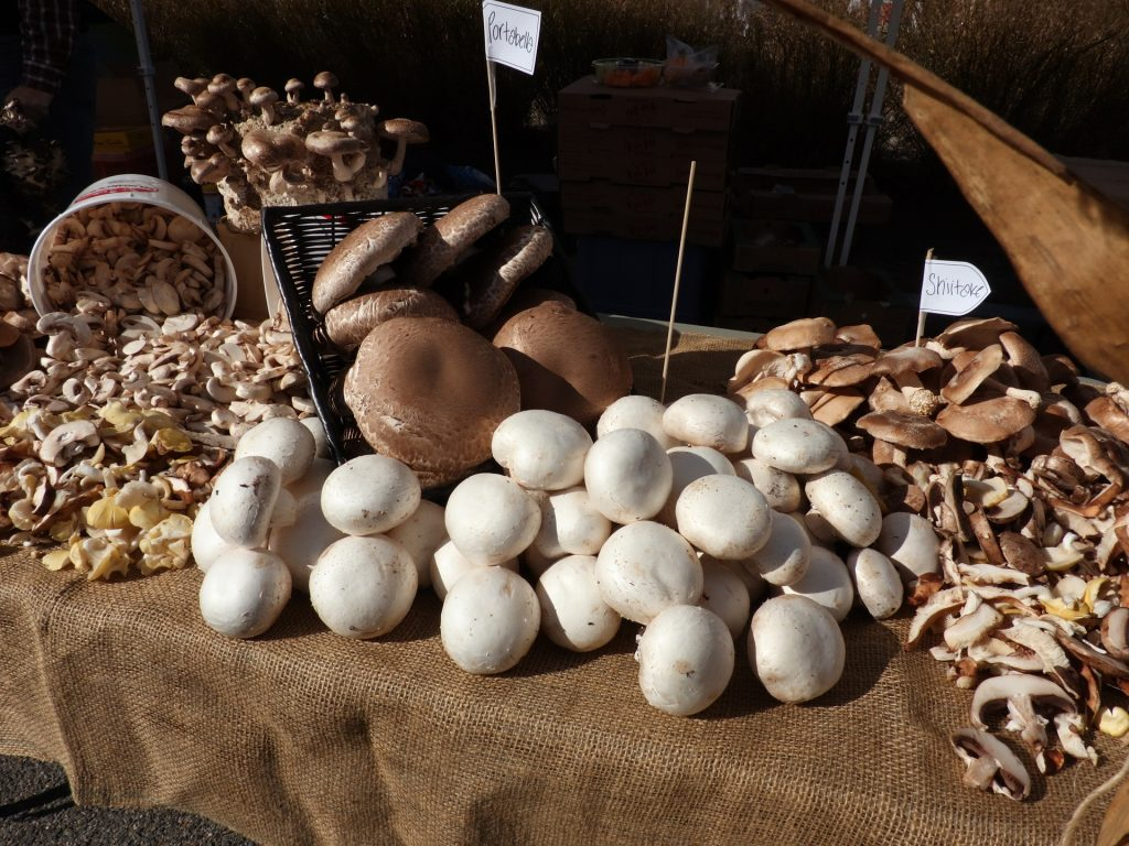 Big Mushroom Cultures Sale. Gourmet mushrooms spread out on a table for sale at farmers market. Enable images to view.