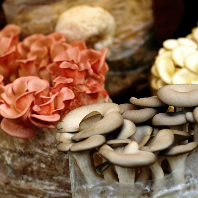 Weekly Mushroom Culture Deals