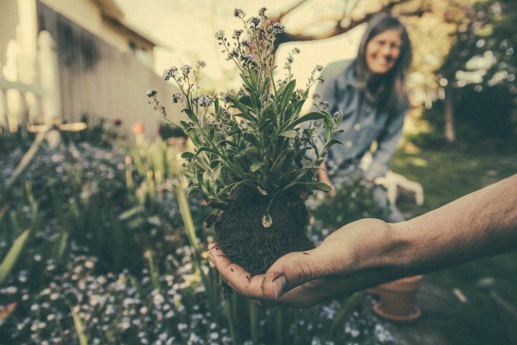 Soil Mamagement & Restoration